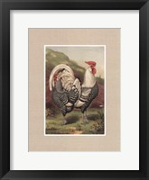 Framed Cassell's Roosters with Mat III