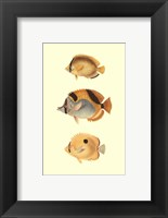 Antique Tropical Fish I Framed Print