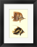 Antique Tropical Fish II Framed Print