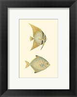 Antique Tropical Fish III Framed Print