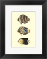 Antique Tropical Fish IV Framed Print