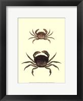 Framed Antique Crab I