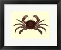 Framed Antique Crab II