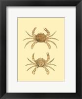 Framed Antique Crab III