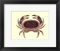 Framed Antique Crab IV