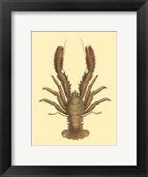 Framed Antique Lobster II