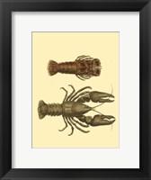 Framed Antique Lobster III