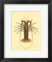 Framed Antique Lobster IV