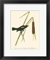 Framed Audubon's Blackbird