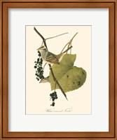 Framed Audubon's Finch