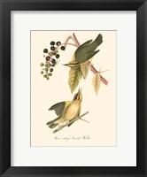 Framed Audubon's Warbler