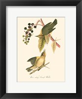 Audubon's Warbler Framed Print