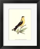 Framed American Finch