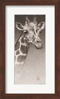 Framed Jean, the Giraffe