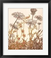 Framed Field of Lace I