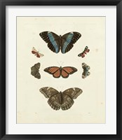 Framed Butterflies IV