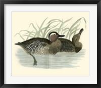 Framed Ducks II