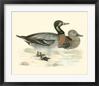Framed Ducks III
