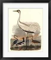Framed Heron Family III