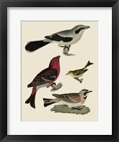 Framed Bird Family II
