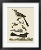 Framed Bird Family V