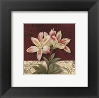 Framed Postcard Lily