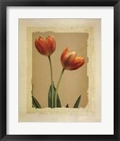 Framed Tangerine Tulips I