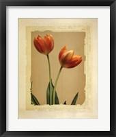 Framed Tangerine Tulips II