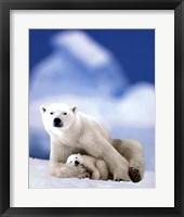 Framed Polar Bear And Baby