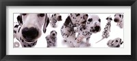 Framed Dogs - Dalmatians