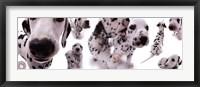 Framed Dogs - Dalmatians