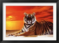 Framed Tiger - sunset