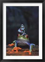 Framed Frogs photo