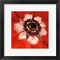 Framed Anemone