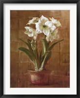 Framed White Amaryllis on Bronze