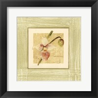 Framed Exotic Floral IV