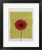 Pretty Daisy Framed Print