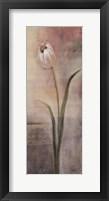 Elegant Tulip Framed Print