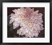 Eastern Beauty I Framed Print
