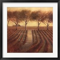 Framed Vintage Sunlit Vineyard