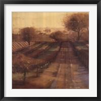 Framed Vineyard Vista