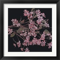 Framed Blossom Branch, 2005