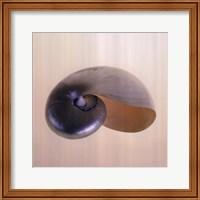 Framed Polished Nautilus