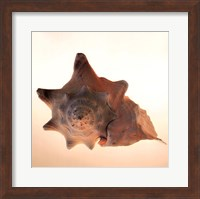 Framed Conch