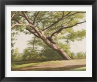 Framed Leaning Tree, 2003