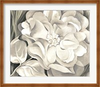 Framed White Calico Flower, 1931