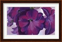 Framed Petunias, 1925