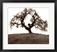 Framed Hillside Oak Tree