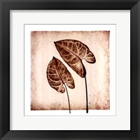 Framed Tropical Caladiums