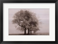 Harmony in Fog Framed Print